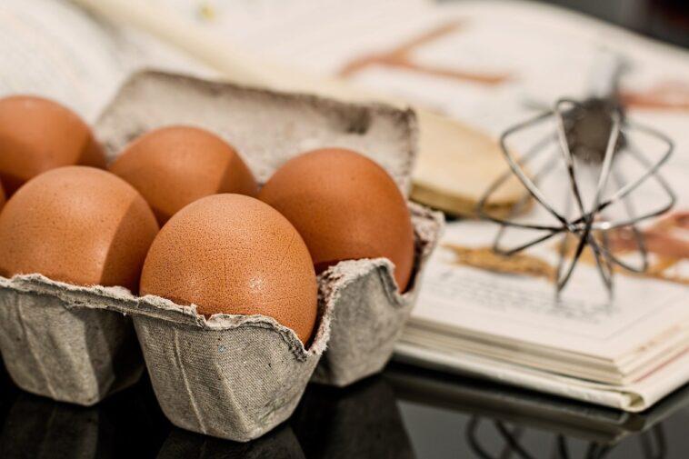 Best Chicken Egg Incubator