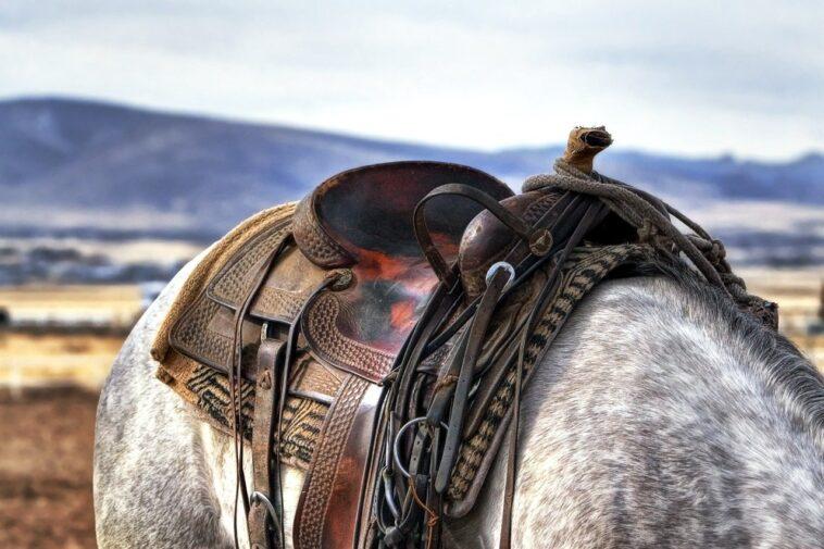 Best Trail Saddles