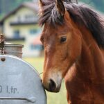 Best Automatic Horse Waterers