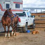 Best Horse Trailer Camera