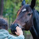 Best Horse Grooming Brushes