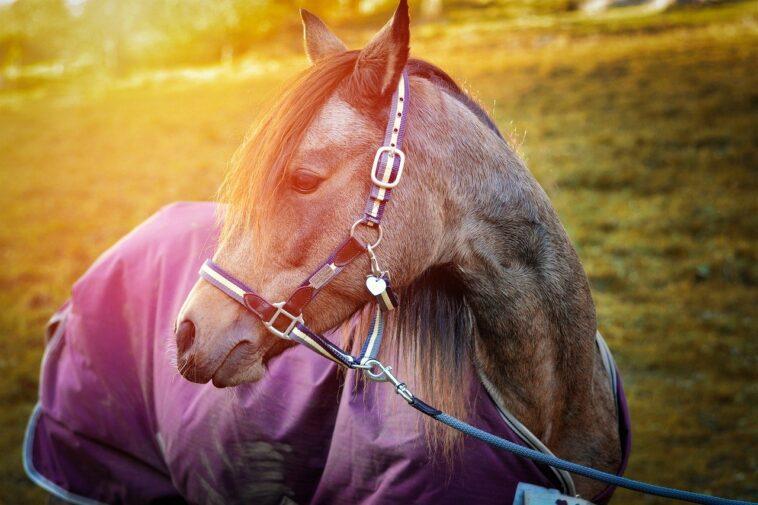 Best Horse Blankets
