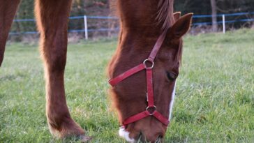 Best Horse Grazing Muzzle