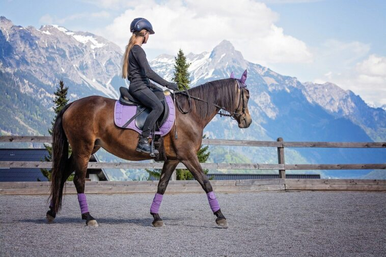 Best Horse Riding Body Protectors